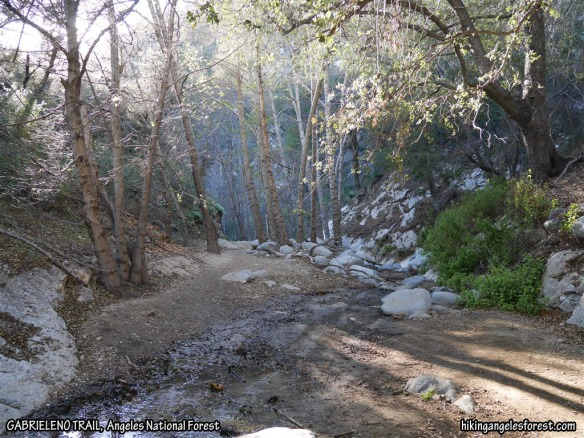 Gabrieleno Trail between the Switzer Picnic Area and the JCT with the Bear Canyon Trail (1-2-2016).