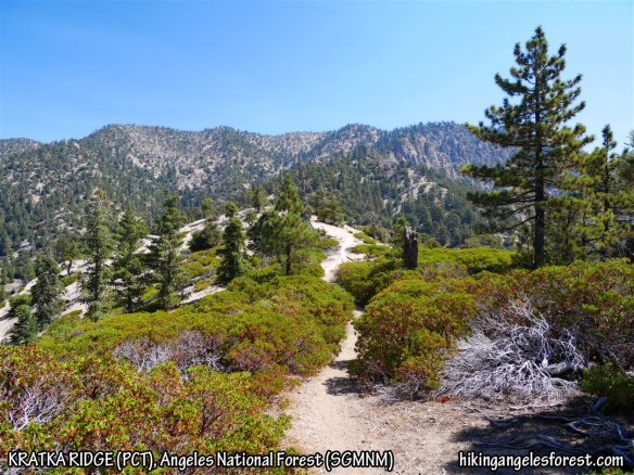 View from the Pacific Crest Trail along Kratka Ridge looking toward Mt. Williamson.
