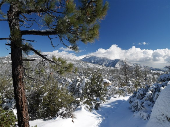 A reasonable start to the year found me enjoying a snowshoeing trip to Mt. Hillyer in Angeles National Forest.