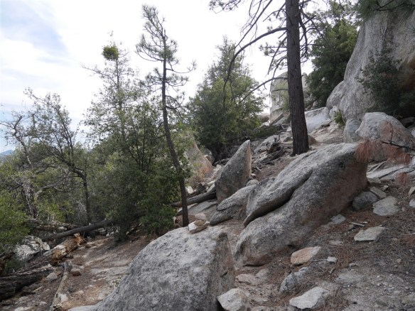 Continue by going over the downed tree at the lower left of the photo or around the boulder closer to the center of the photo (to the left of the last tree pictured). If going around the boulders, turn left as soon as the option presents itself.