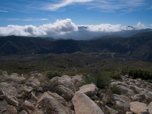 View looking toward Mt. Wilson from Vetter Mountain.